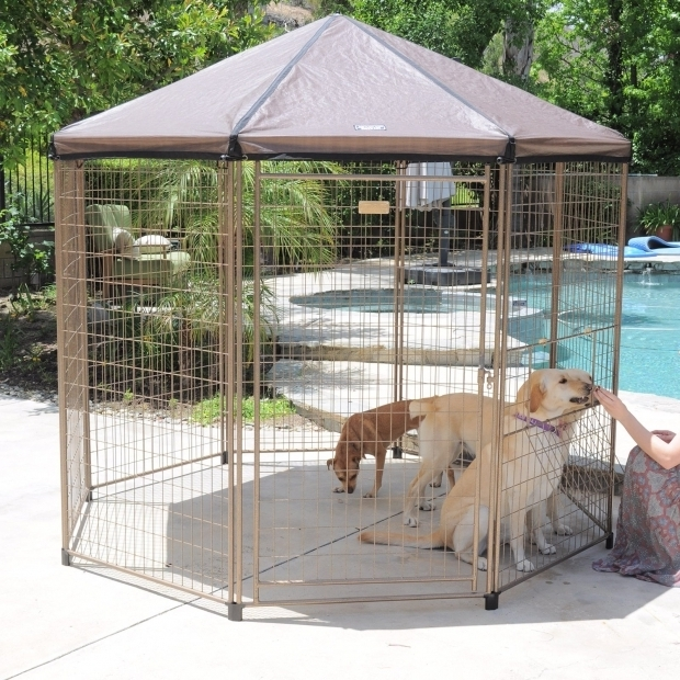 Fascinating Advantek Pet Gazebo Advantek Original Pet Gazebo Large Dog Kennels At Hayneedle