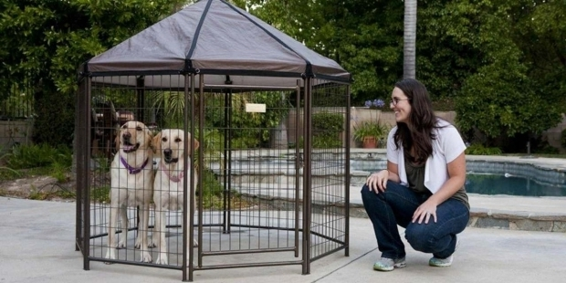 Awesome Advantek Pet Gazebo Modular Outdoor Dog Kennel Review The Advantek Pet Gazebo Animal Hub