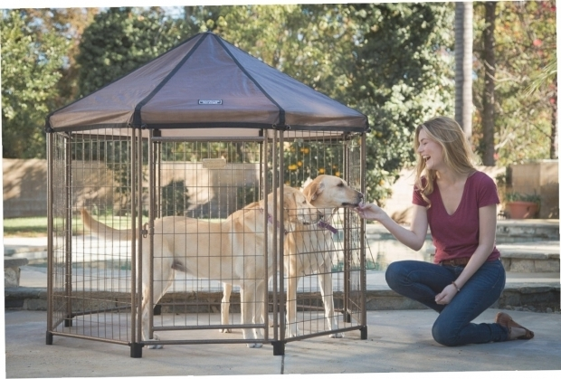 Gorgeous Advantek Pet Gazebo Outdoor Kennel Advantek Pet Gazebo Outdoor Kennel Gazebo Ideas