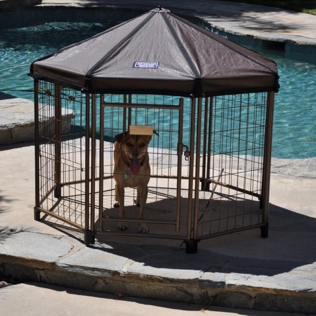 Incredible Advantek Pet Gazebo Outdoor Kennel Advantek Original Pet Gazebo Medium Dog Kennels At Hayneedle